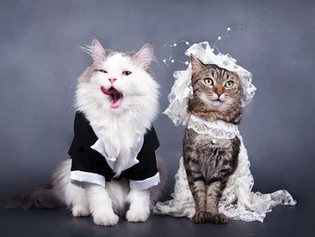 Wedding hindsight rowan january never put a wedding dress on a cat junglespirit Images
