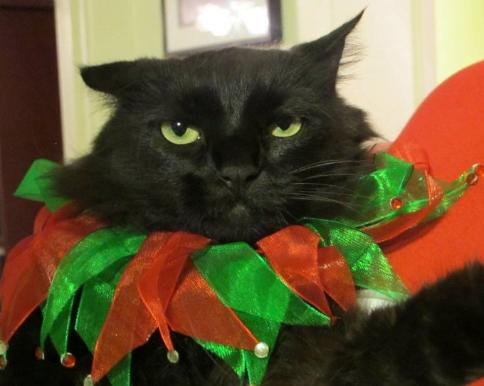 36659-Lola-Grumpy-Cat-Christmas-QGYd